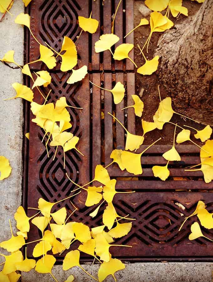 L. Gray_gingko-web