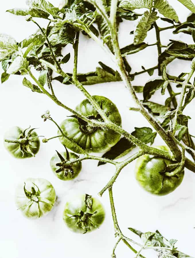 Roasted Green Tomato Salsa   Bijouxs Little Jewels
